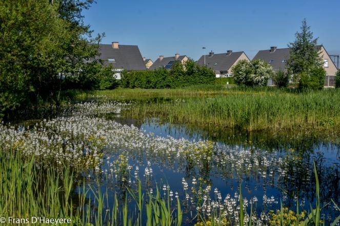 2018-05-04 Wevelgem-24